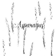 Hand Drawing Art Asparagus Watercolor Illustration