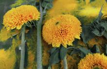 Beautiful Sunflowers On Blue B...
