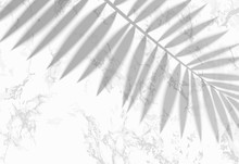 The Transparent Shadow Overlay Effect. Tropic Leaf