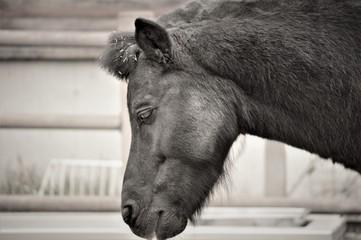 落ち込んだ馬 モノクロ