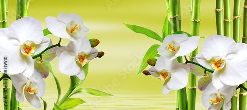 Fototapeta spa background with ochideen and bamboo in green obraz