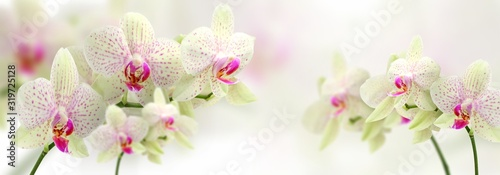 Fototapeta vintage color orchids in soft color and blur style for background obraz