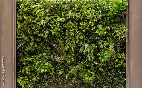 vertical green garden for background