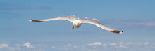 White Seagull Flying Over The ...