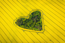 Real Heart Shaped Copse Of For...