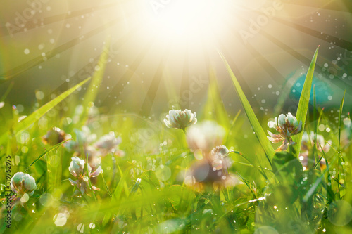 Obraz Art Spring Natural Green Background, Clover Flowers with bokeh cirlce and sunlight. Field after rain - fototapety do salonu