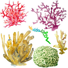 Set Of Various Corals And Spon...