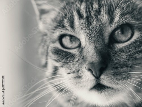 Fototapety, obrazy: Extreme Close-Up Of Cat