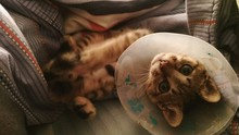 Portrait Of Cat In Cone At Home