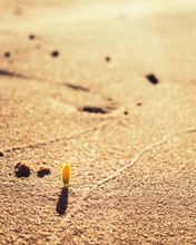 Flower In The Sand
