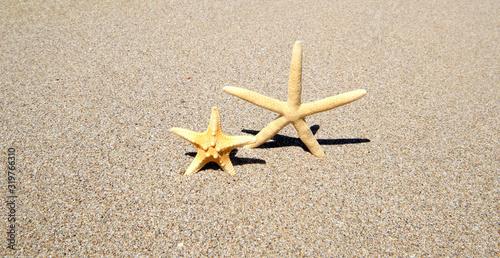 Two starfish on sand. Nature horizontal background. Canvas Print