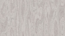 White Spruce Wood Texture Back...