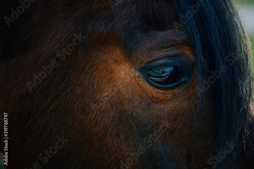 Fotografía Close-Up Of Horse