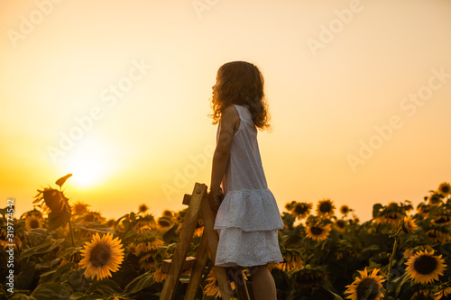 Fototapeta Happy child girl on the top of ladder, against sunflowers field