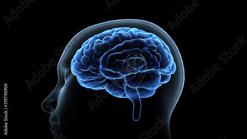Obraz Brain head human mental idea mind 3D illustration background - fototapety do salonu
