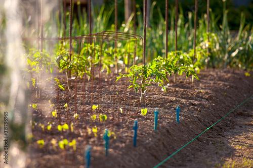 Fototapeta Jardin potager au soleil. obraz