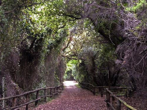 Path into Fairy Tale World Canvas Print