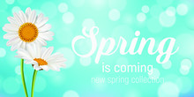Chamomile Floral Background And Spring Lettering Comes. Vector Illustration EPS10