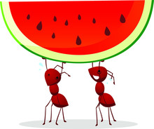 Ants Carrying Watermelon