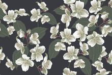 Floral Seamless Pattern, Jasmi...