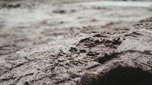 Close-Up Of Shoe Print On Sand...