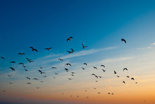 Low Angle View Of Birds Flying Against Blue Sky During Sunset