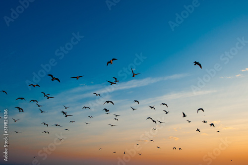 Fotografija Low Angle View Of Birds Flying Against Blue Sky During Sunset
