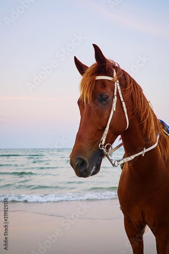 Valokuva Horse Standing At Beach Against Sky