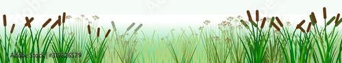 Fototapeta The reeds