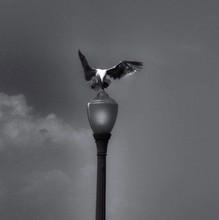 Low Angle View Of Bird On Lamp Post