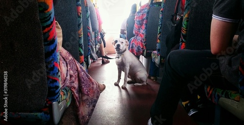 Dog Amidst People On Seat In Bus - fototapety na wymiar