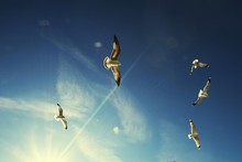 Low Angle View Of Seagulls Flying Against Blue Sky