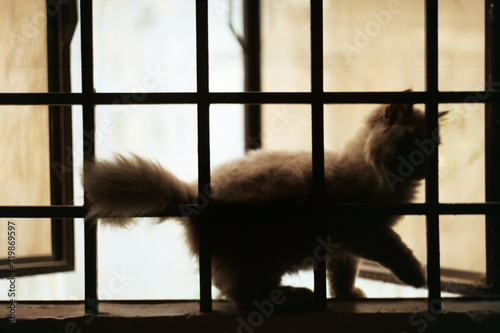 Canvas Cat On Window Sill