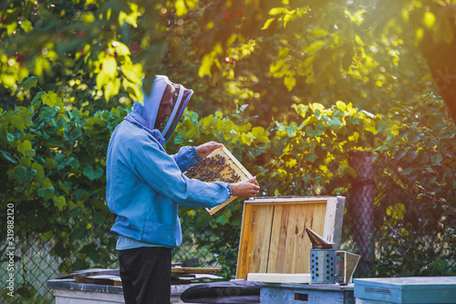 beekeeper inspects frame with queen cells on apiary in the evening in the rays of the setting sun Wallpaper Mural