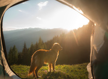 Camping With A Dog In The Moun...