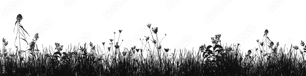 Fototapeta Grass natural silhouette as background
