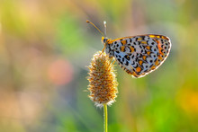 Closeup Beautiful Butterfly In...