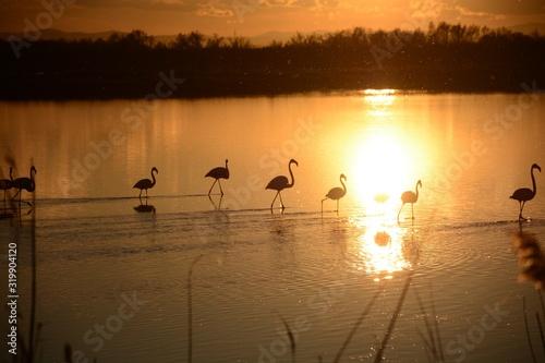 Carta da parati Silhouette Flamingos On Lake During Sunset