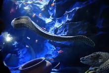Eels Swimming In Tank At Aquarium