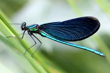 Close-Up View Of Dragonfly
