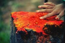 Close-Up Of Cropped Hand Touching Orange Powder Paint On Tree Stump