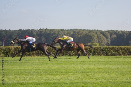 Fotomural Horse Race On Grassy Field Against Sky
