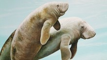 Close-Up Of Manatees Painted On School Wall