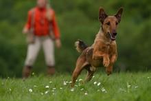 Portrait Of A Dog Running On Landscape