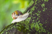 Close-Up Of Snail On Moss Covered Tree Trunk