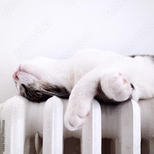 Fotografie, Obraz CLOSE-UP OF SLEEPING CAT