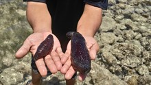 Midsection Of Man Holding Dead Sea Slugs At Beach