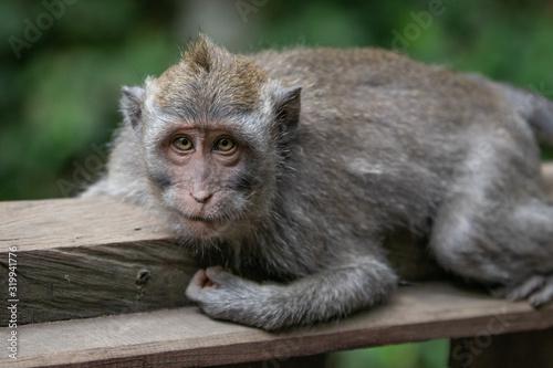 Photo baffled monkey watches humans