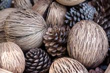 Dry Brown Othalanga And Pine Cone.