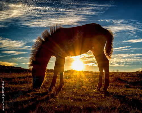 Papel de parede Silhouette Horse Grazing On Field Against Sky During Sunset